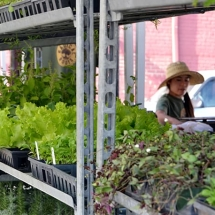 Woman with vegetable seedlings in a city market