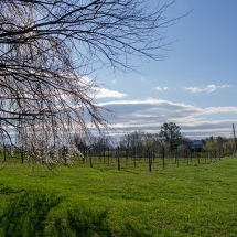 Photograph of a green field by CHS student