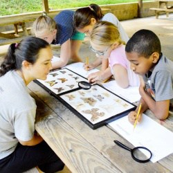 Students examining and drawing butterflies at Camp Albemarle