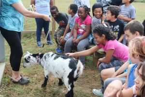 Jackson-Via students petting a goat during Farm-to-School Week
