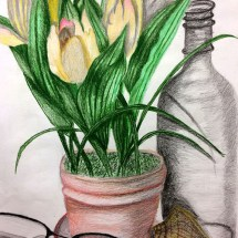 colored pencil drawing still life composed of a put of tulips, glass bottle, eyeglasses, etc.