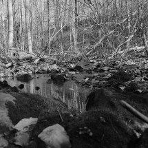 black and white landscape of the woods and a creek