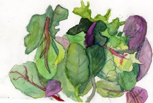 March 2016 Harvest of the Month was local salad greens! Painting by Mackenzie Baumgarten