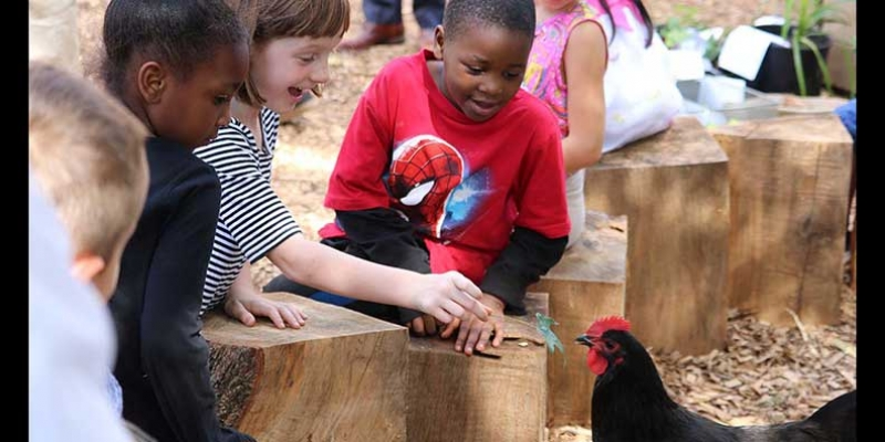 Johnson students observing a chicken in the City Schoolyard Garden.