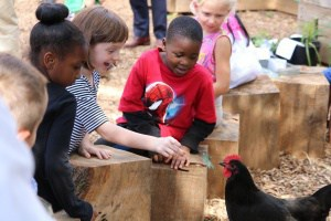 Children in the Johnson City Schoolyard with a chicken.