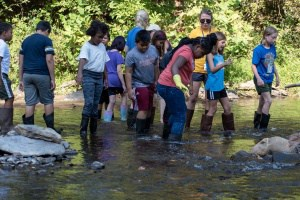 students wade in the creek at Camp Albemarle.